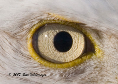 Eye-of-the-Eagle-2