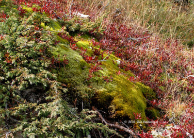 Moss on Hillside Yellowstone 109