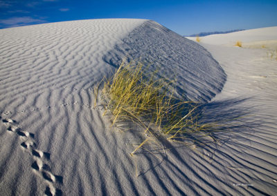 Tracks in the Sand Dunes_5241