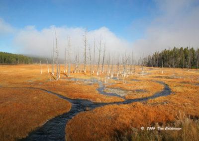 Yellowstone 125