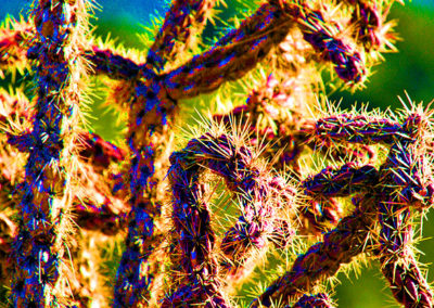 Abstract Cactus 001