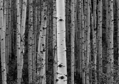 Aspen Grove Lg_0306