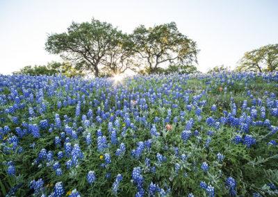 Blue Bonnets Marble Falls Texas_2079