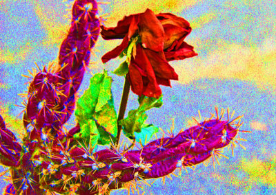 Cactus Rose Abstract Abique, NM 122 copy copy