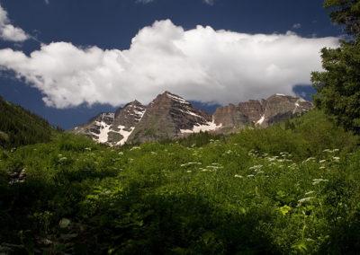Cow Parsnip & Elk Mountains Maroon Bells Colo 7749