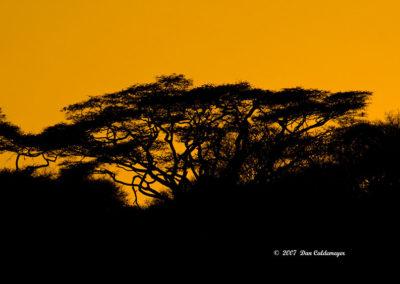 Dusk at Lake Manyara NP Tanzania Africa 1193