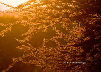 Evening Sunlight Filtering Through Trees at Dusk Lake manyara Tanzania Africa 1210