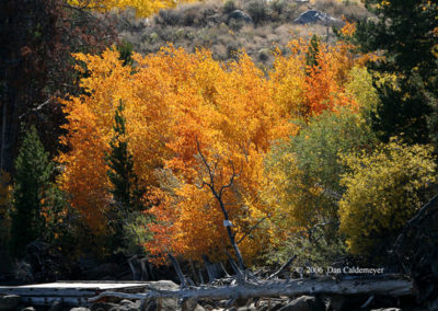 Fall Colors in Wyoming 252