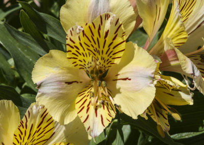 Ghost Flower Taos NM 292