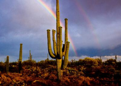 Giant-Saguaro-Double-Rainbow-Lg-Tuscon_Az_6461