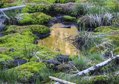 Gold Reflection Mossy Bogs Yellowstone NP 093