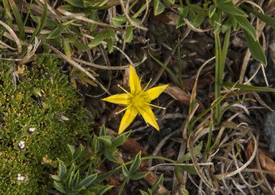 Golden Star Colo 0914