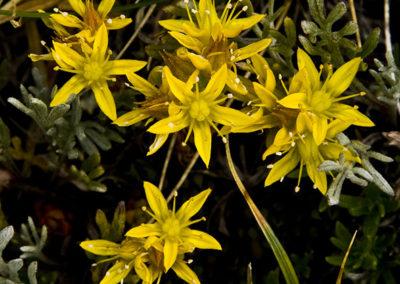 Golden Stars Rocky Mountain NP Colo 0919