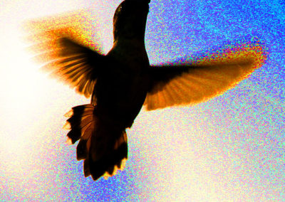 Hummingbird Pecos NM Abstract 223