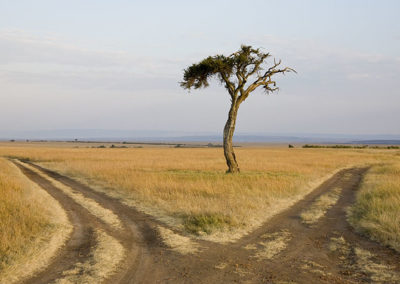 Lone Tree Fork in the Road Maasi Mara Kenya_1113