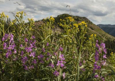 Mountain Kittentails & Wild Daisys Gothic Colo 8654