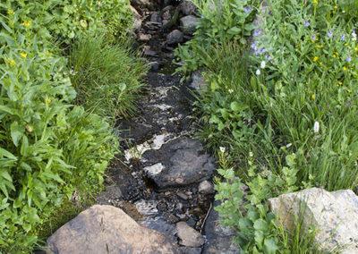 Mountain Spring Rocky Mountain NP Colo 0980