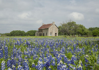 My PicturesBlue Bonnets Marble Falls_1966