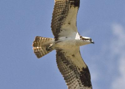 Osprey Pagosa Spr Colo 9437