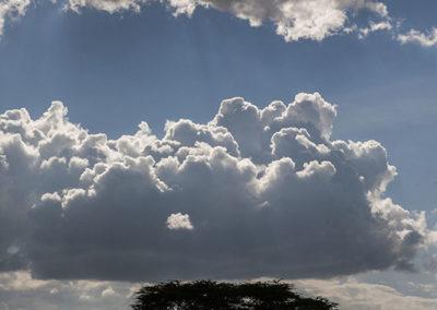 Pending Storm Acacia Tree Kenya Africa_0937