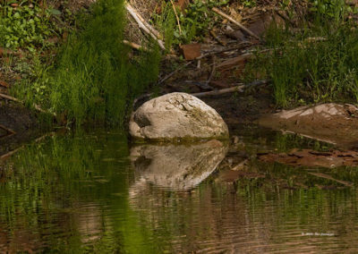 Reflection of Rock_3505