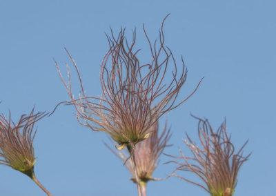 Smoke Flower Pecos NM 101