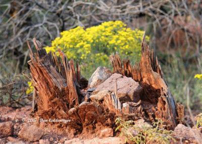 Stump Framing Flowers 225