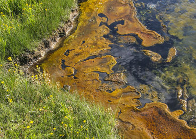 Sulphur Algae Yellowstone NP 084