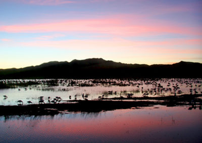 Sunset Bosque del Apache NM _8593