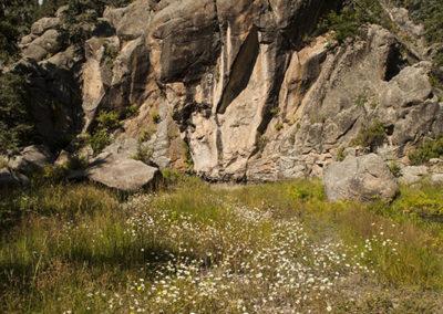 Wild Flowers Jemez Mountains 2079
