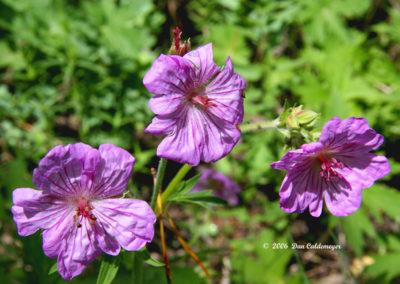 Wild Purple Flax Marble Colo 054