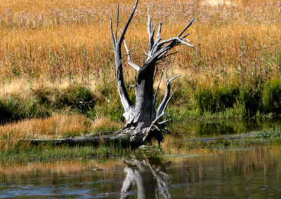 Yellowstone-Reflections-161